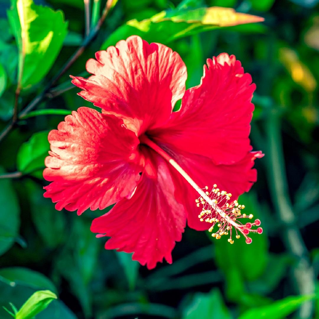 Tropical Flower - 1080x1080